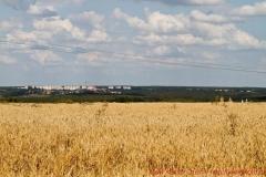 Алексинский район  25