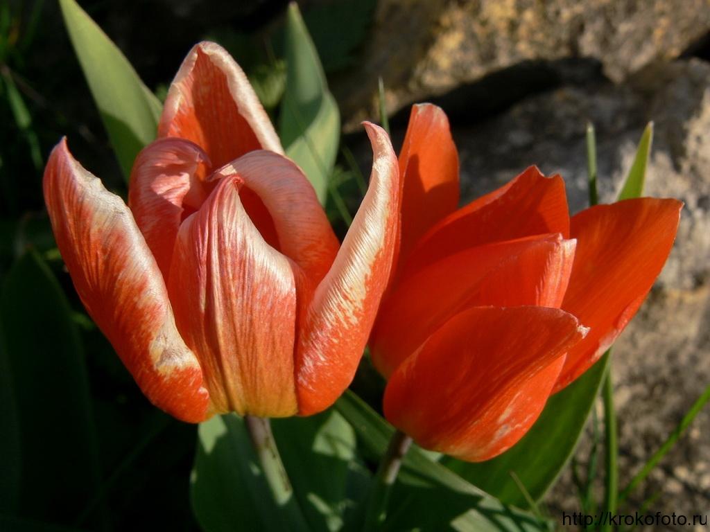 цветы 76