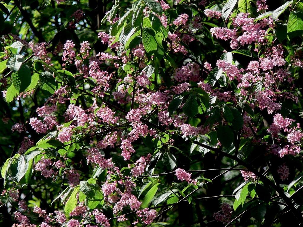 цветы 80