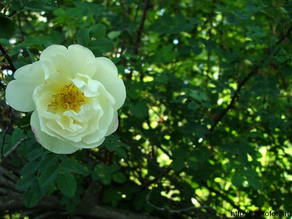 цветы 86