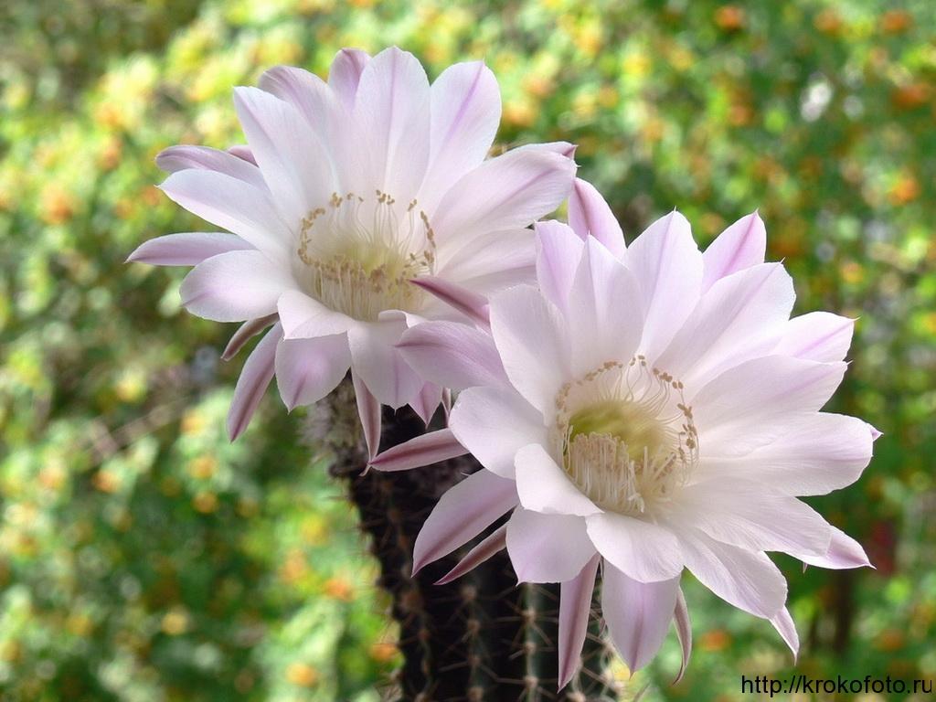 цветы 93