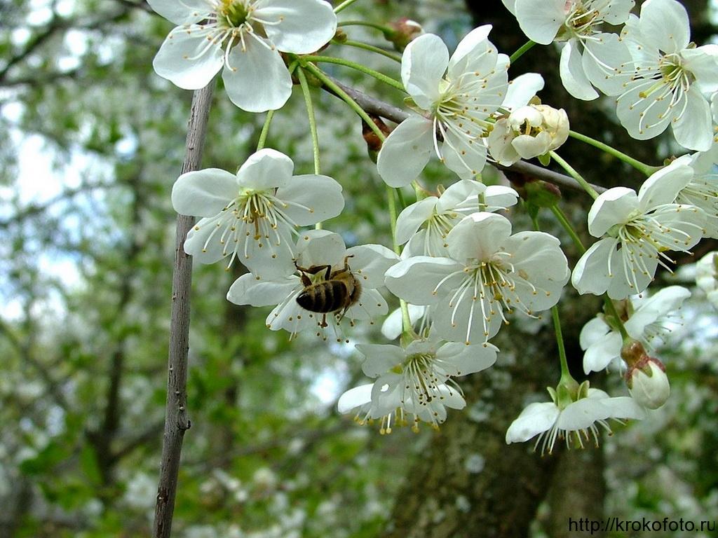 цветы 97