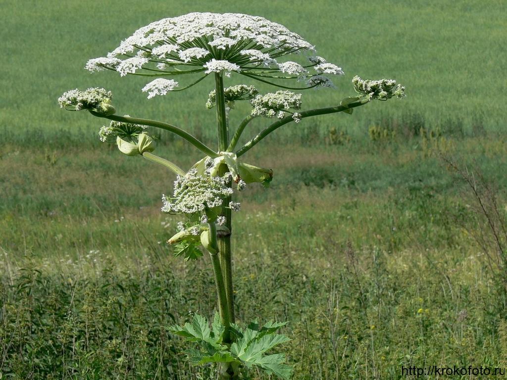 цветы 108