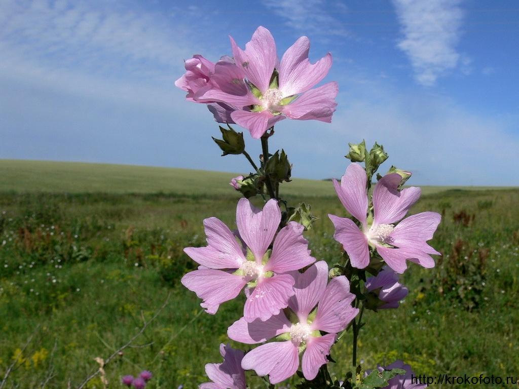 цветы 111