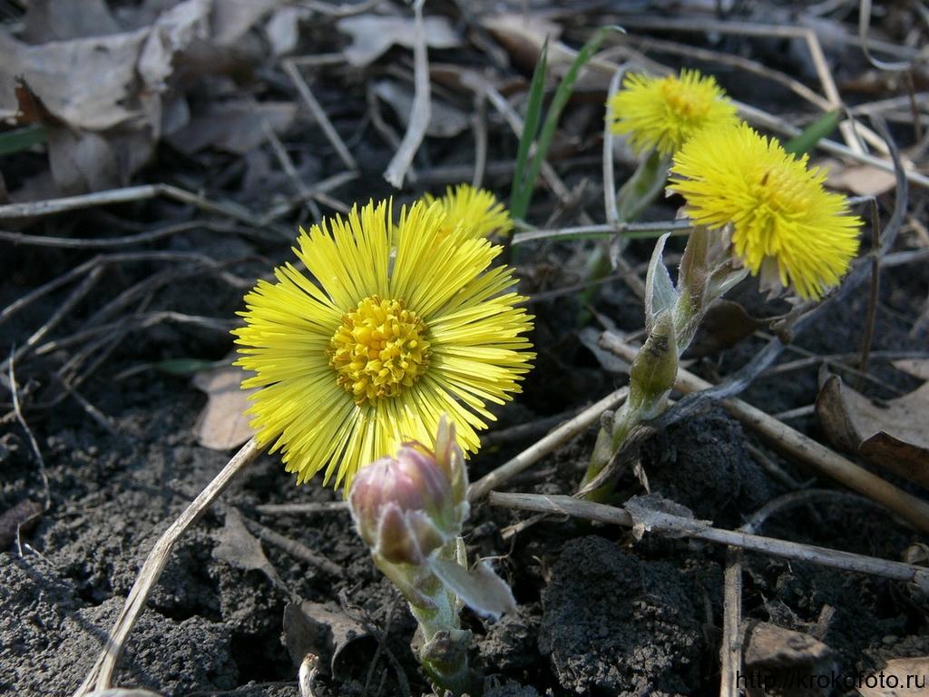 цветы 116