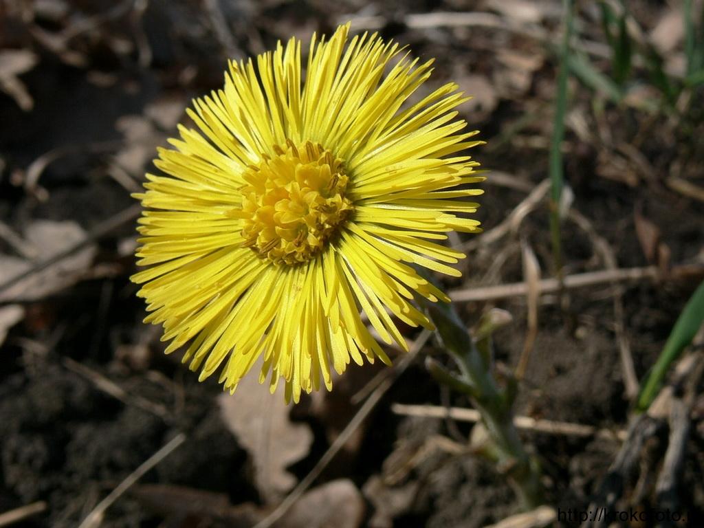 цветы 119