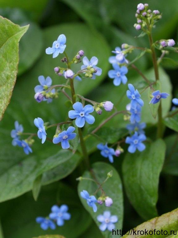 цветы 129