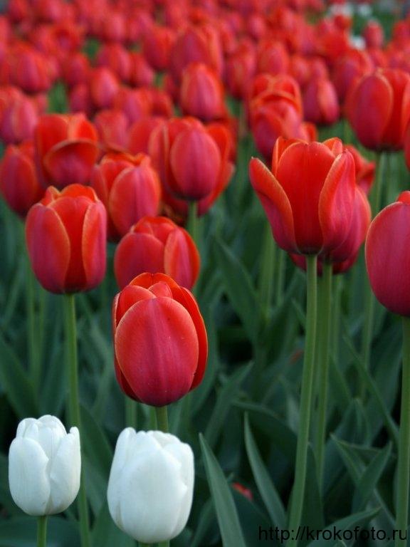 цветы 137