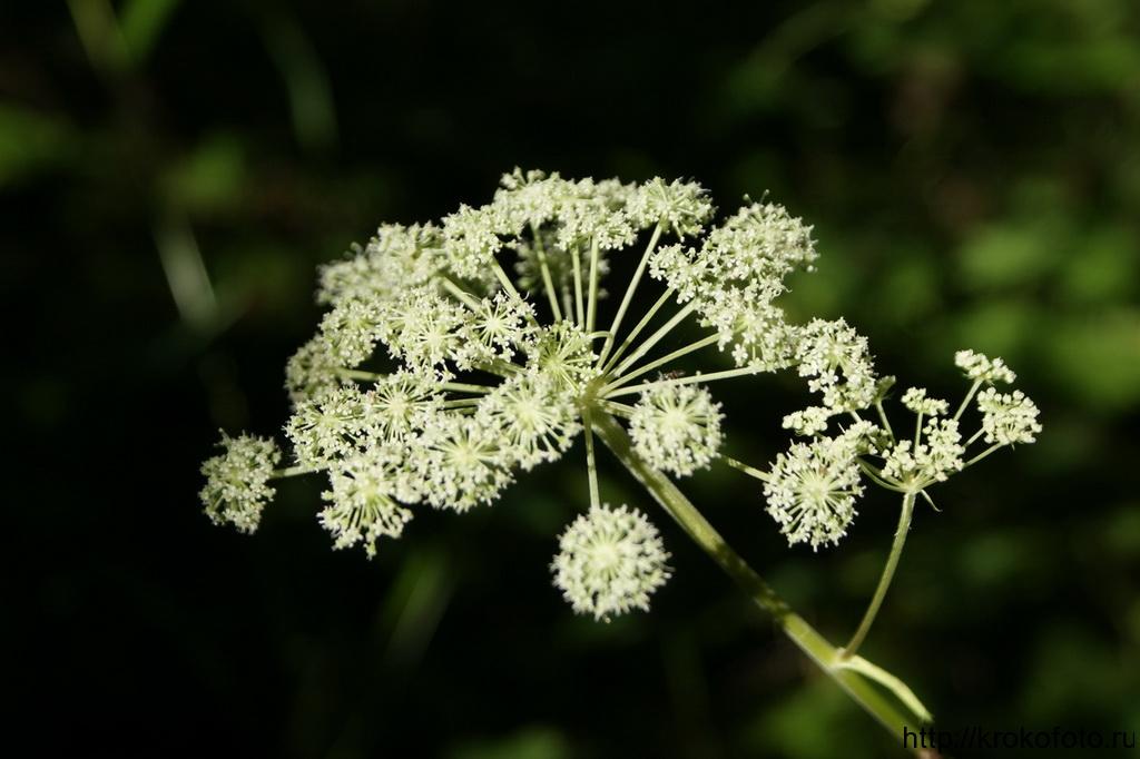цветы 144