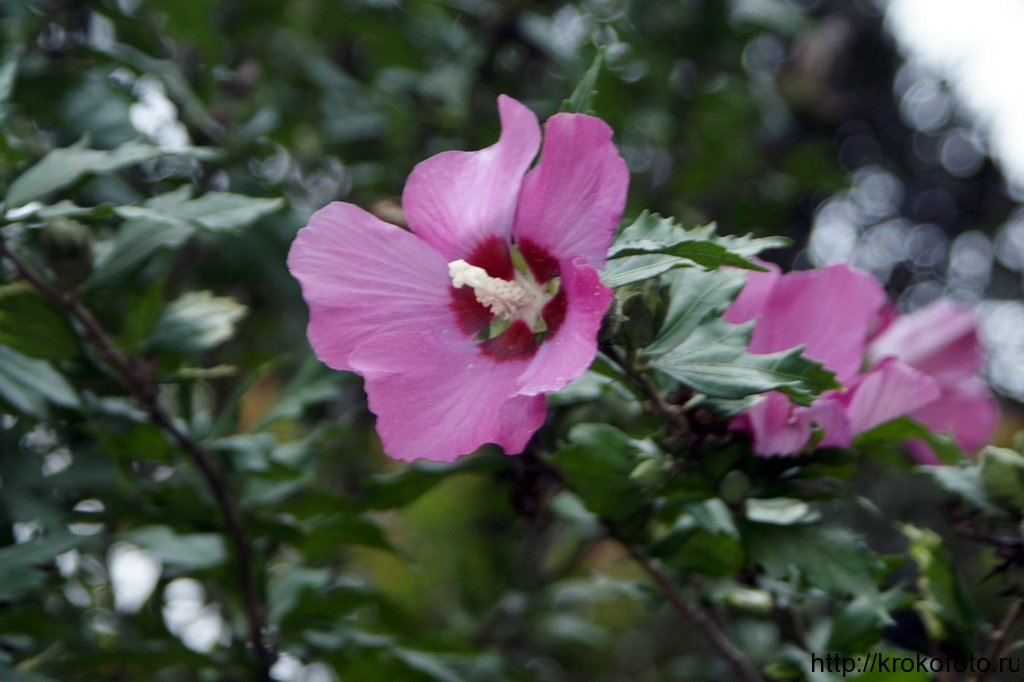 цветы 29