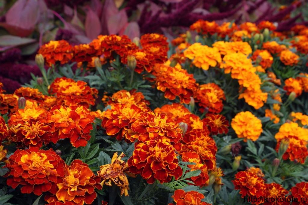 цветы 30