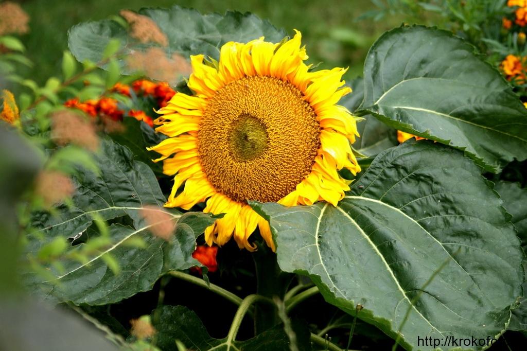 цветы 35