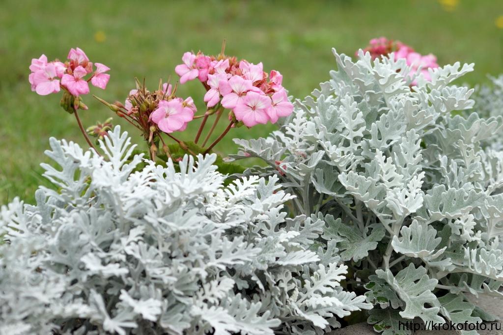 цветы 39