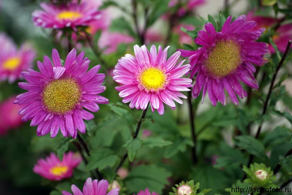 цветы 41