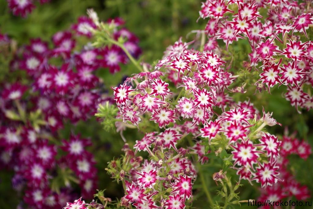 цветы 43