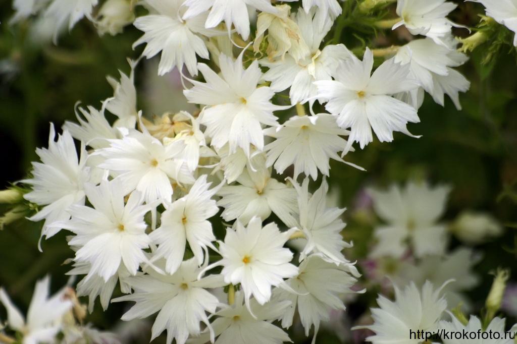 цветы 46