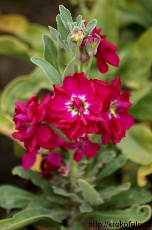 цветы 48
