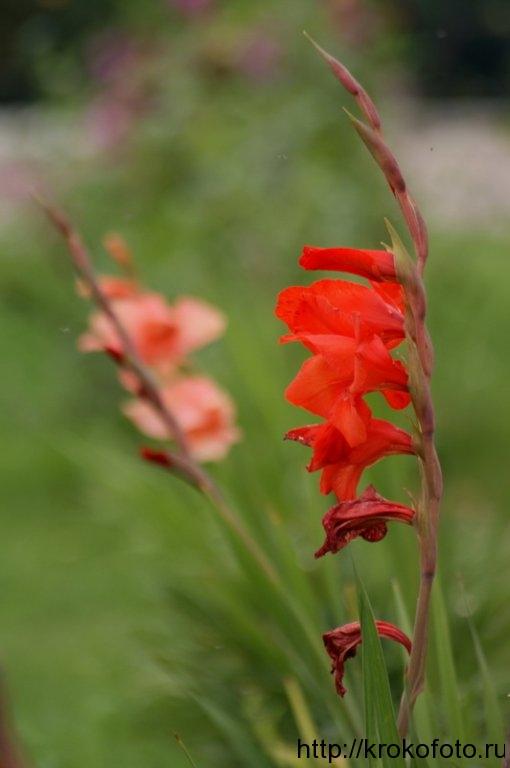 цветы 49