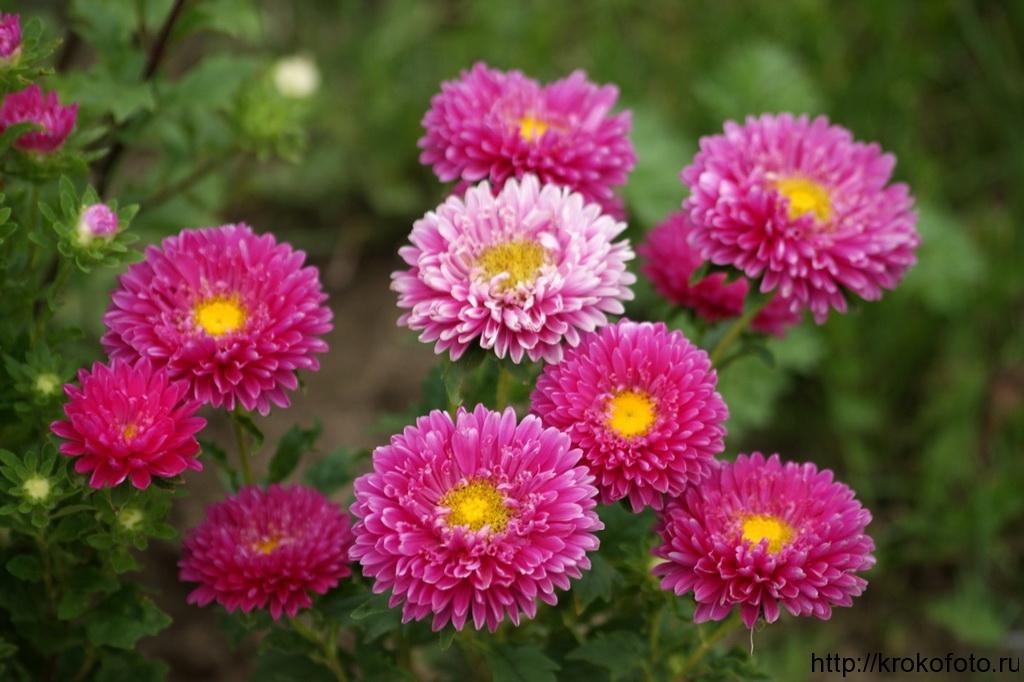 цветы 50