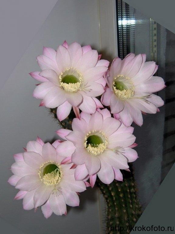 цветы 59