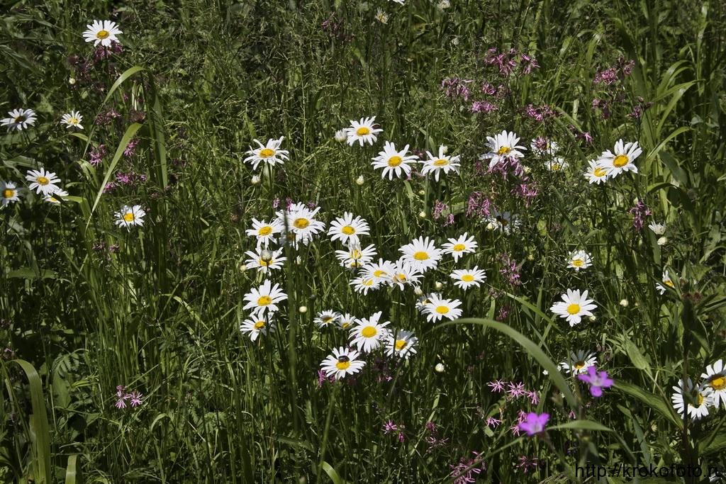 цветы 61