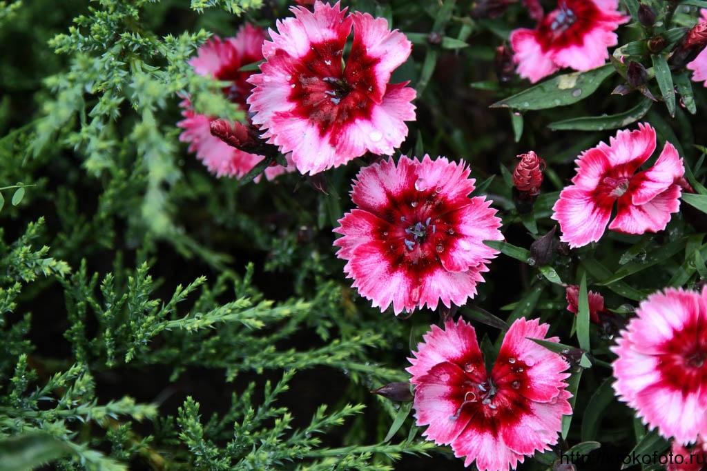 цветы 154