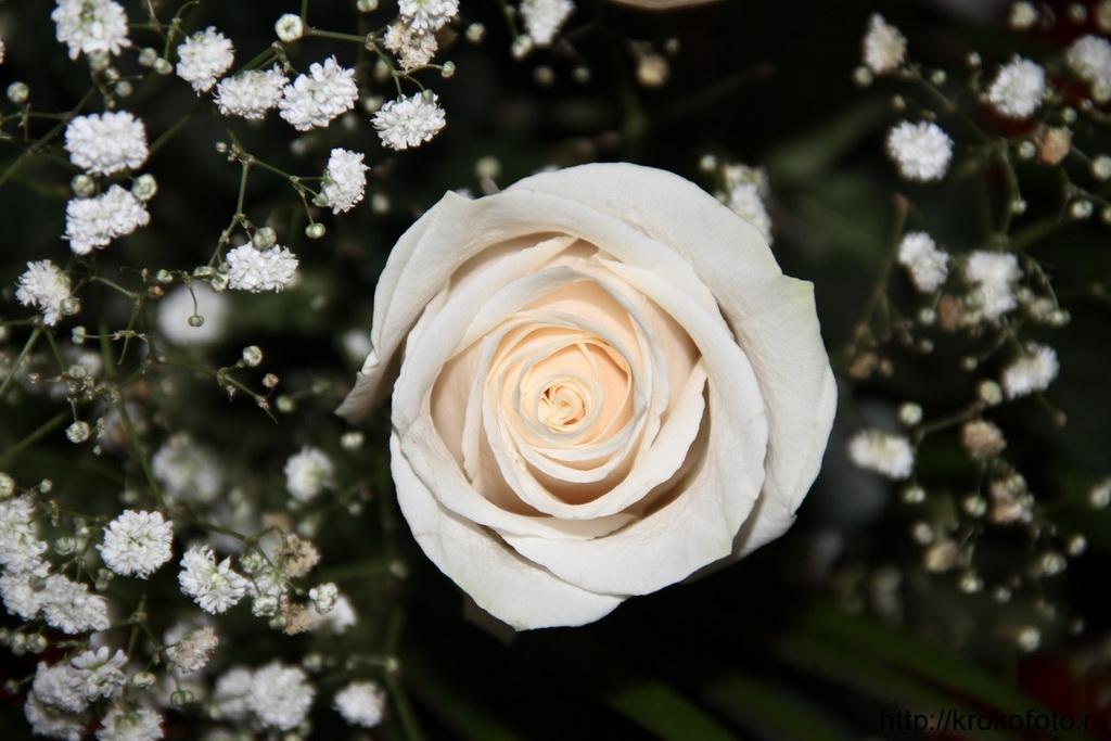 цветы 64