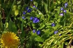 цветы 174