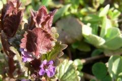 цветы 75