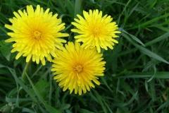 цветы 78