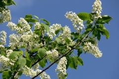 цветы 79