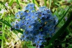 цветы 81