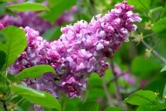 цветы 84