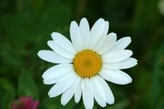 цветы 89