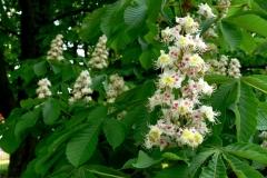 цветы 91
