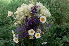 цветы 101