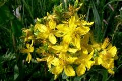 цветы 106