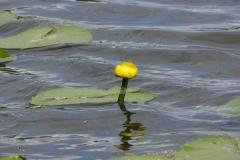цветы 114