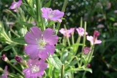 цветы 117