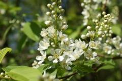 цветы 121