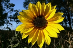 цветы 125