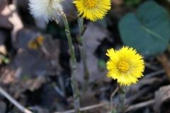 цветы 127