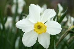 цветы 128