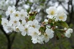 цветы 131