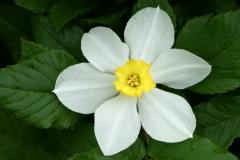 цветы 134
