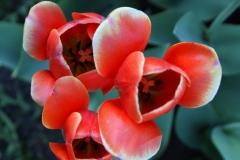 цветы 136