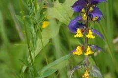 цветы 140