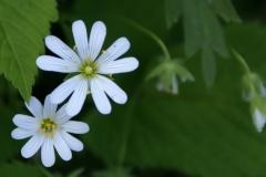 цветы 143