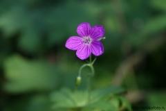 цветы 146