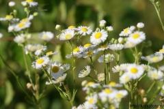 цветы 147